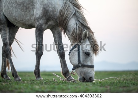 Grazing horse on sunset