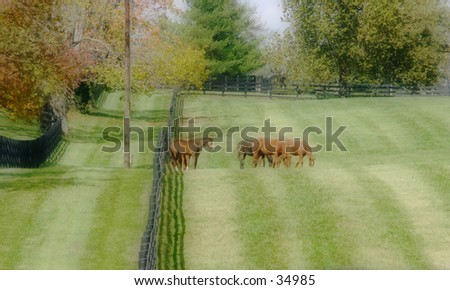 Grazing Horses - stock photo
