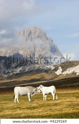 grazing in high mountain - stock photo