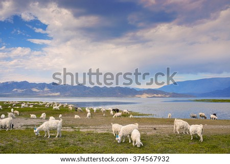 grazing sheep and goats on the background of the mountain landscape and the river - stock photo