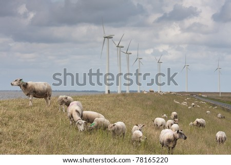 Grazing sheep with some big windmills behind them - stock photo