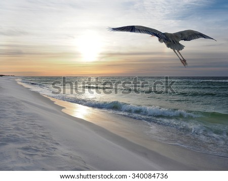 Great Blue Heron Flies Over White Sand Florida Beach at Sunrise - stock photo