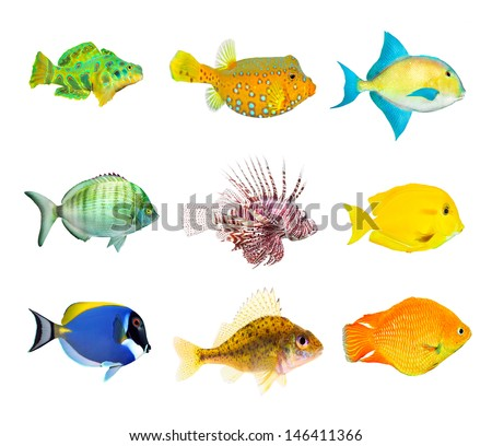 Great collection of a tropical fish on a white background.  - stock photo