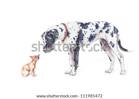 Great Dane and Chihuahua isolated on a white background - stock photo