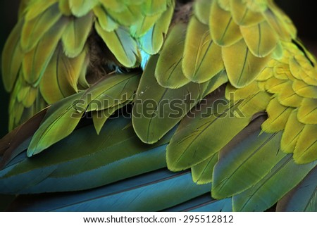 Great green macaw (Ara ambiguus), also known as the great military macaw or Buffon's macaw. Plumage texture. Wildlife animal.  - stock photo
