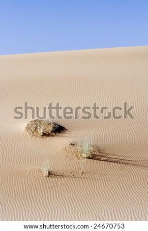 great indian desert near Jaisalmer, India - stock photo