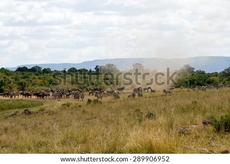 Great Migration in Masai Mara National Park with cyclone, Kenya. - stock photo