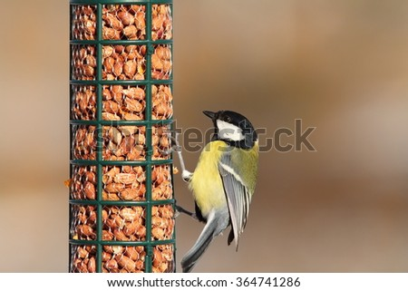 great tit eating on peanut garden bird feeder ( Parus major ) - stock photo