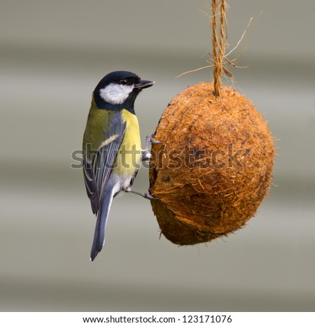 Great Tit on a feeder - stock photo
