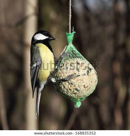 Great Tit (Parus major) on the tallow ball - stock photo