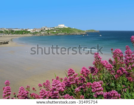 Great Western beach and red valerian (Centranthus ruber) in Newquay, Cornwall UK - stock photo
