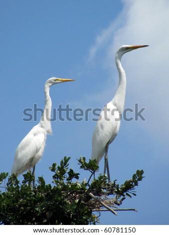 Great white egret / heron - stock photo