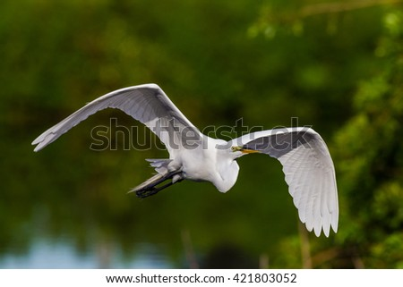 Great white egret in flight - stock photo