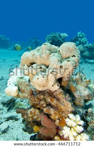 great white sea sponge at the bottom of tropical sea, underwater