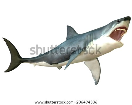 Great White Shark Attack - The Great White Shark is an apex-predator and is found throughout the world's seas. - stock photo
