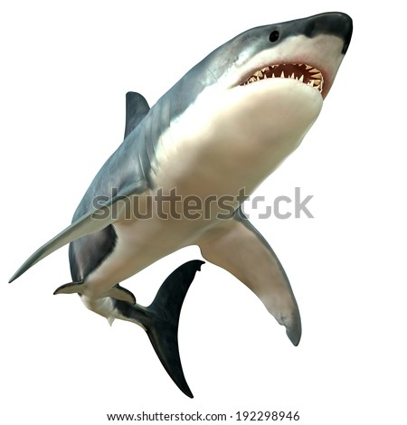 Great White Shark Body - The Great White Shark is the largest predatory fish in the sea and can grow to 26 feet and live as long as 70 years. - stock photo
