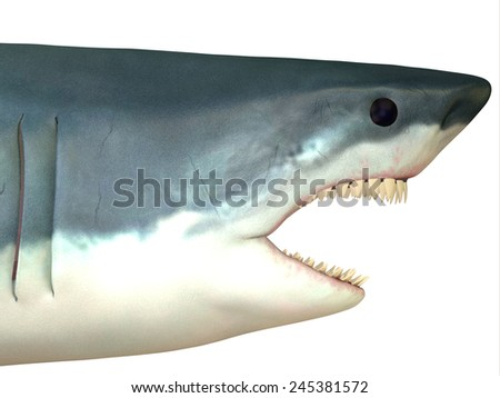 Great White Shark Head - The Great White shark is found in coastal waters of all major oceans and can live to 70 years. - stock photo