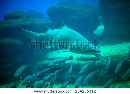 Great white shark in the depths of the sea. - stock photo