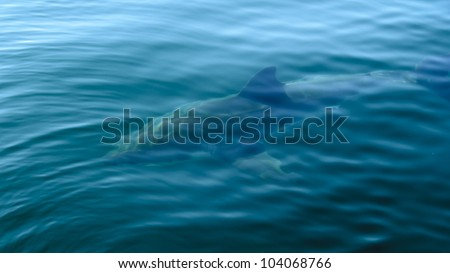 Great White Shark under water in False Bay - stock photo