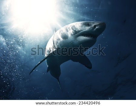 Great White Shark with rays of sun on top left - stock photo