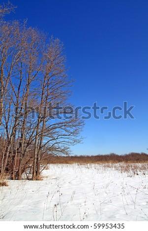 greater oaks on winter field - stock photo