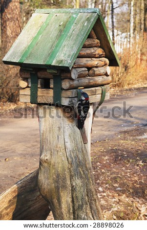 Greater spotted woodpecker on birdfeeder in spring park - stock photo