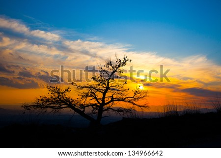 Greece Athens Penteli mountain sunset behind burned tree in forest