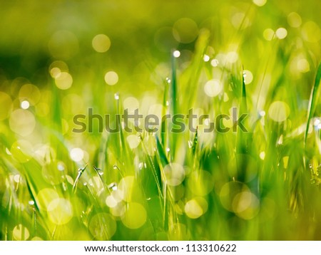 Greed grass in a dew. Close up shot with selective focus and beautiful natural bokeh - stock photo