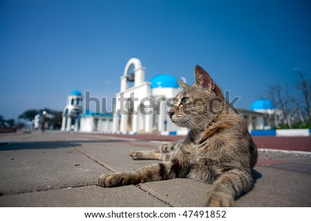 Greek Architecture with Cat - stock photo