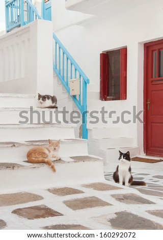 Greek males - three cats sitting on the stairs at the entrance to the house