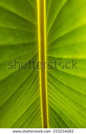green - stock photo