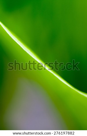 Green, abstract composition with leaf texture and soft focus - stock photo