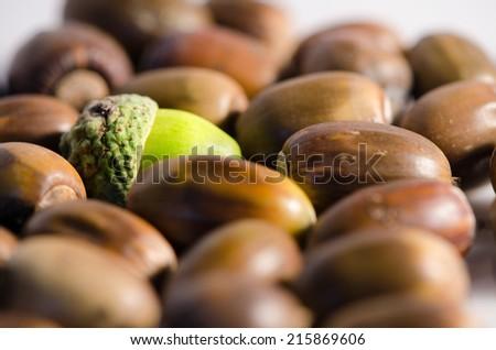 Green acorn among lot of ripe acorns. - stock photo