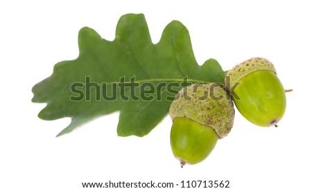 Green Acorn on isolated on white background - stock photo