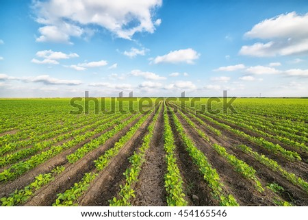 green agricultural landscape and blue sky