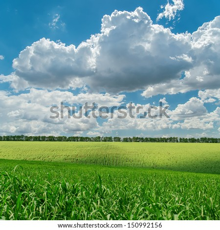 green agriculture field under cloudy sky - stock photo
