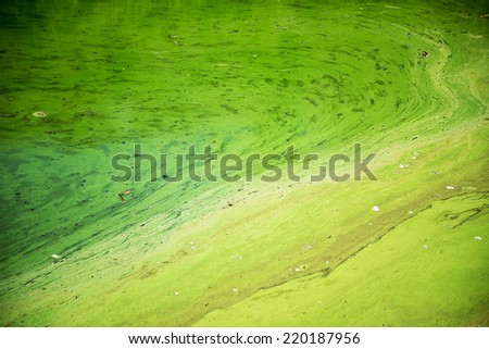Green algae blooms in a river in Vietnam.  The rise in algae blooms appears to be driven by climate change - stock photo