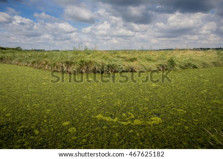 Green algae covering a Suffolk waterway starving it of oxygen