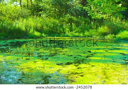 Green Algae Filled Pond - stock photo