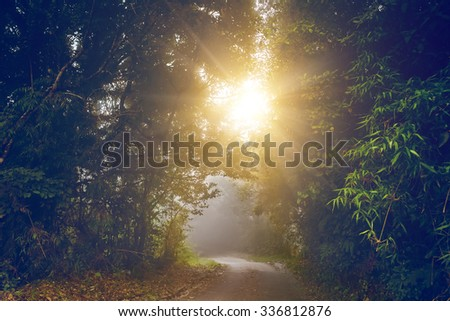 green alley with rural footpath with sunshine and green trees - stock photo
