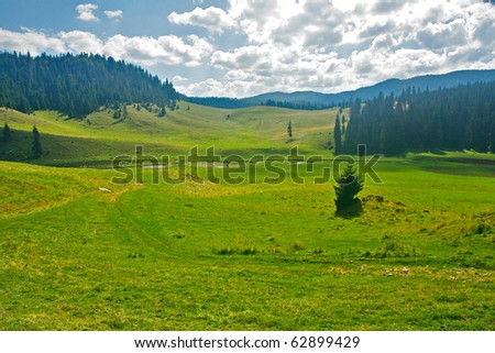 Green alpine valley plateau - stock photo