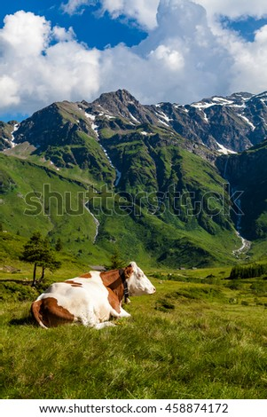 Green alps with cow lie dow on pasture where sun playing in gras. - stock photo