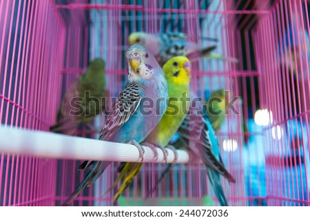 Green and blue parrot perched on a round tube baluster pink. - stock photo