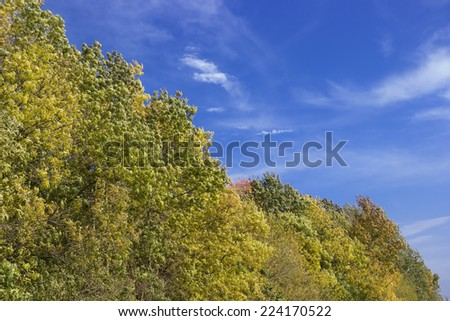 green and colorful foliage, trees line, detail, autumn - stock photo