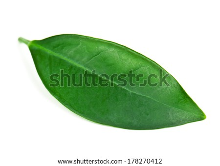 green and lush tea leaf on white
