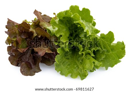 Green and maroon-brown bundles of lettuce isolated on a white background - stock photo