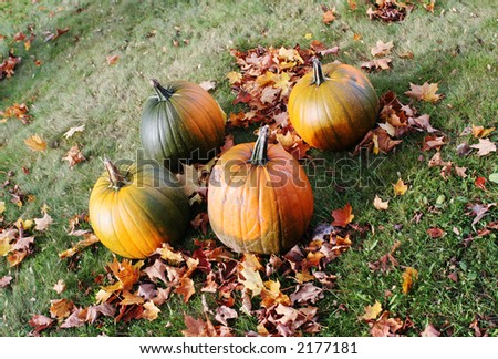 Green and orange pumpkins in a field