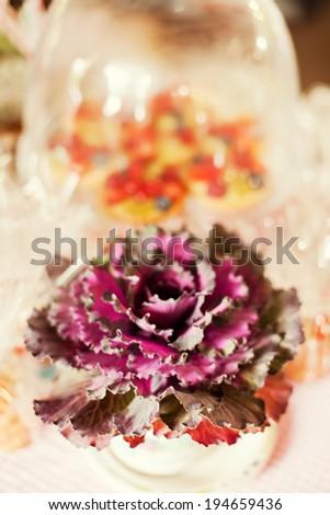 green and purple ornamental cabbage - stock photo