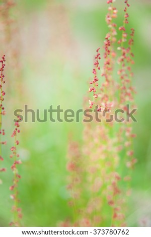 Green and red flowers or seed, wild plant in the field, shot with narrow depth of field to give a sense of abstraction.  - stock photo