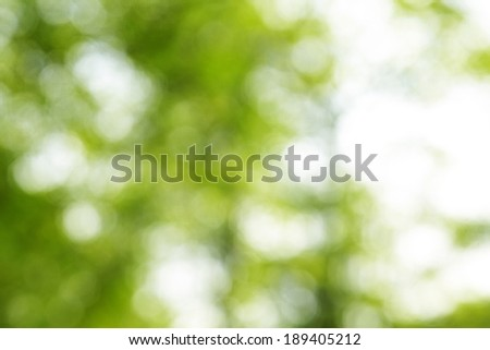 green and white background from tree in sun light - stock photo